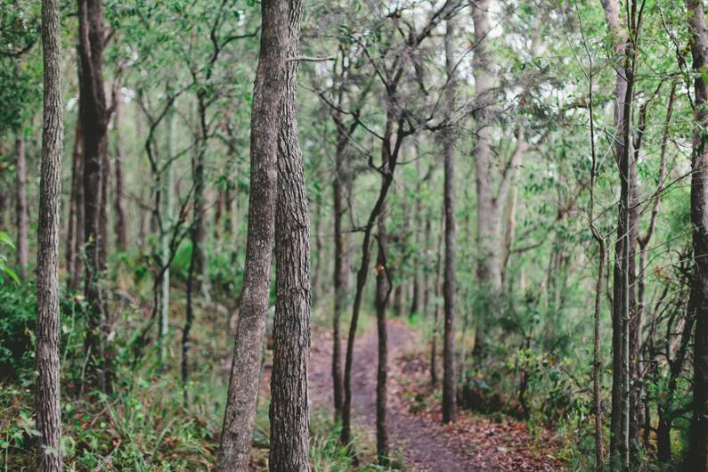 Rainy day bushland